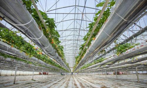 Vertikalūs ūkiai